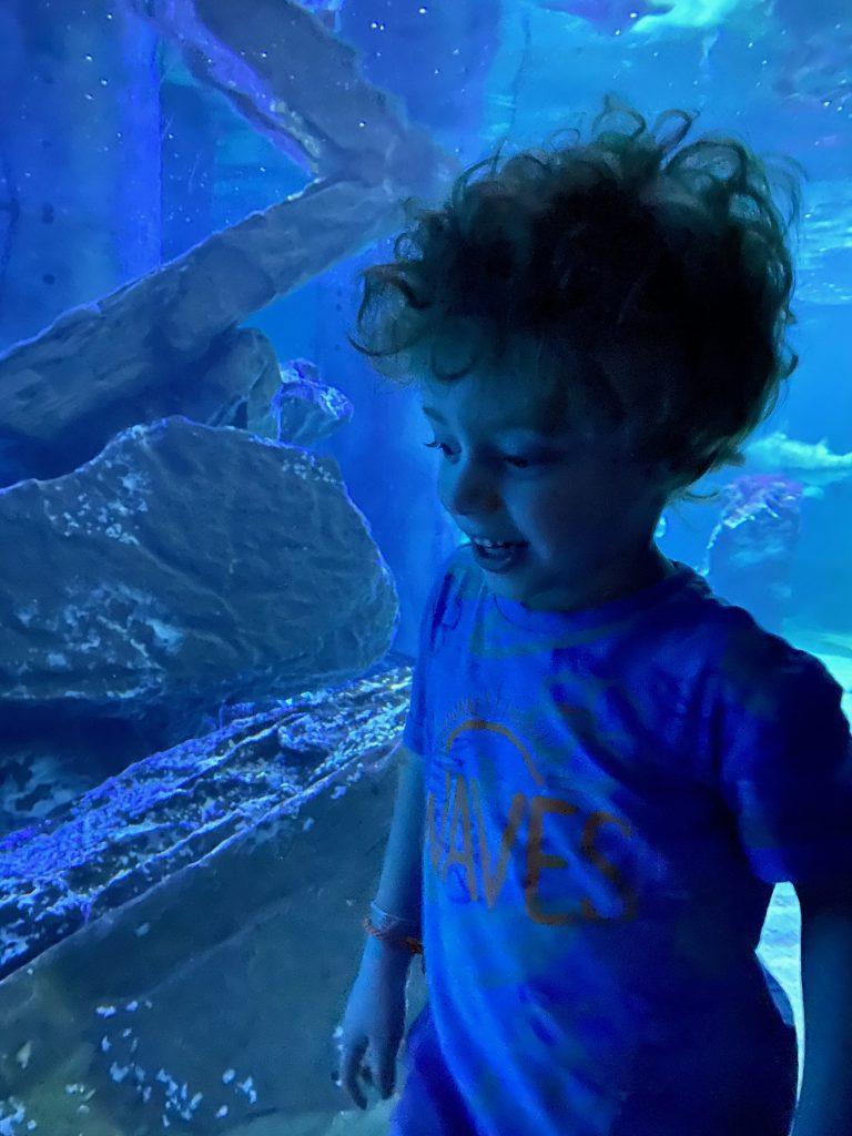 Visitare l'acquario di Cattolica con i bambini: Mattia