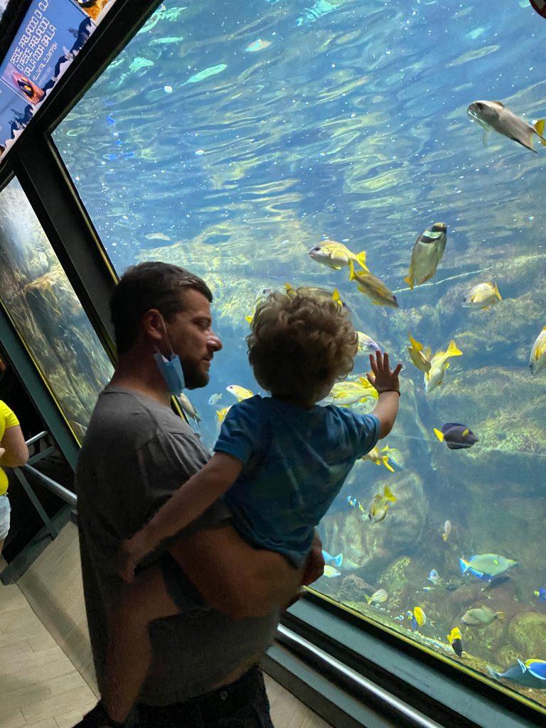 Visitare l'Acquario di Cattolica con i bambini